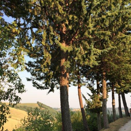 San Severino Marche, Ιταλία: I pini di Aleppo