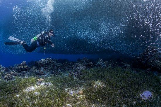 Panglao, Philippines: Sardines @ Napaling
