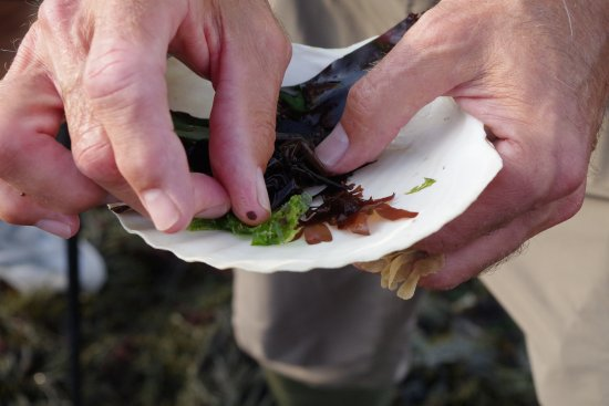 GAEL Tours: Seaweed food reference discussion