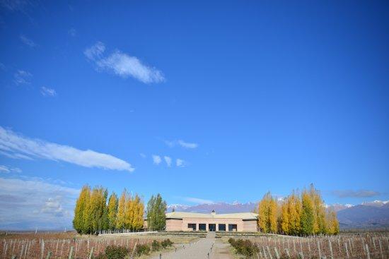 Tunuyan, Argentina: Salentein