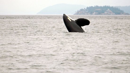 Cowichan Bay, Canadá: Breaches are the best!