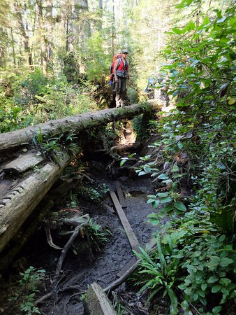 Victoria Capital Regional District, Kanada: Some sections of the trail are challenging...