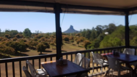 Glass House Mountains, Australia: Having lunch outside under cover.