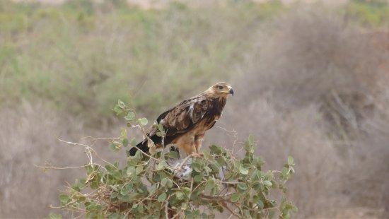 Tsavo, Kenya: photo2.jpg
