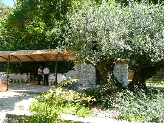 Gemenos, Γαλλία: Pré olivier