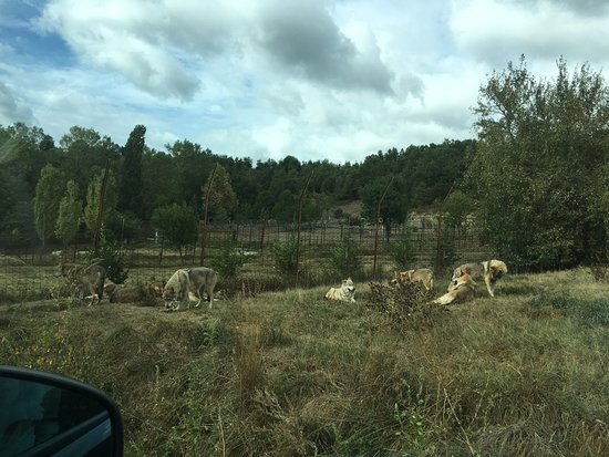 Murazzano, إيطاليا: lupi