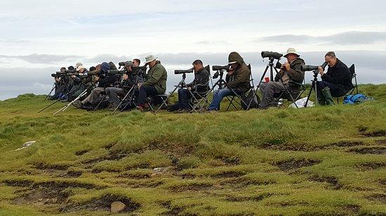 Килки, Ирландия: Watch the birdie!!