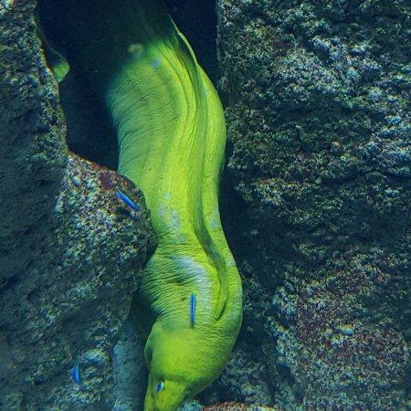 Aquarium de Biarritz : IMG_20170909_171711_495_large.jpg