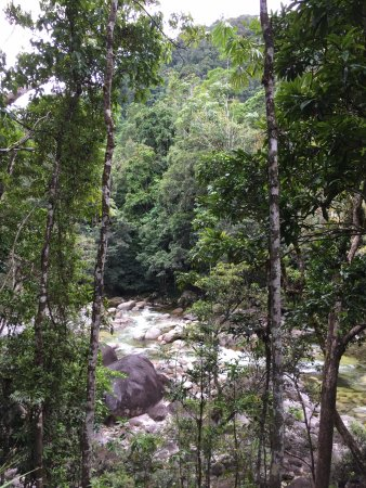 Daintree Region, Australia: beautiful rainforest