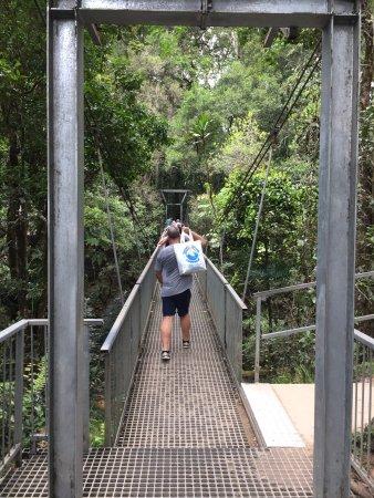 Daintree Region, Australia: suspension bridge is very wobbly to walk on but fun
