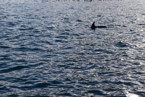 Grande Riviere Noire: Dauphins