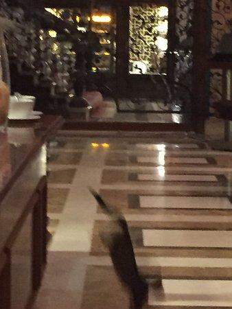Mardan Palace: 5star hotel?scam  詐欺  dolandırılık