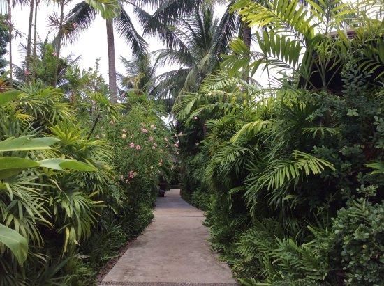 Bo Phut Resort & Spa : Hotel grounds