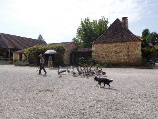 Le Bugue, Francia: Le berger, son chien et ses oies