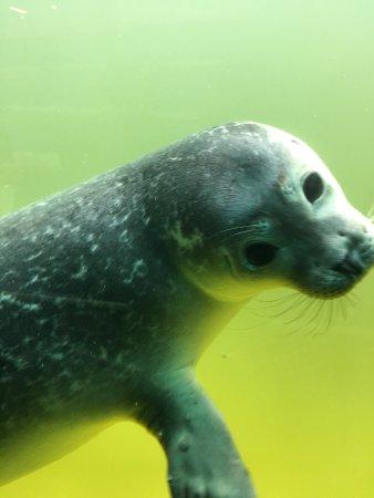 Norden, Germany: Seehundstation und Waloseum