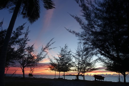 Kota Kinabalu District, Malasia: DSC09898_large.jpg