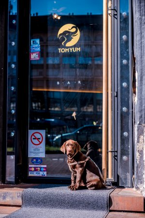 Dog-friendly restaurant - Picture of Tom Yum Bistro, Budapest