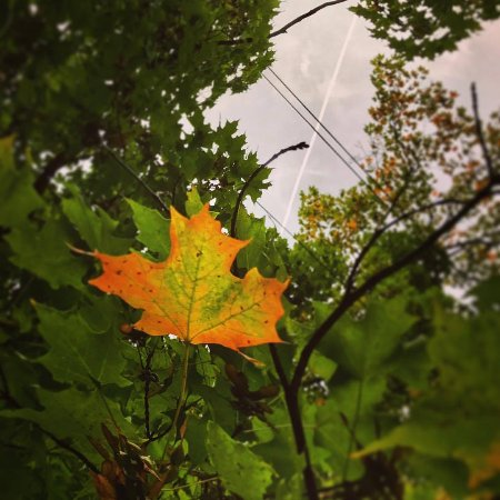 Blackinton Manor Bed & Breakfast: Seeing Early Signs of Fall!