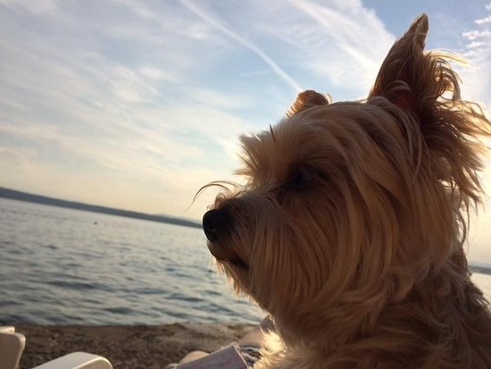 Dramalj, Croatia: i cani possono accedere alla spiaggia