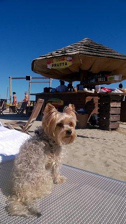 Bagno 26 TOP - Picture of Bagno Tiki 26, Rimini - TripAdvisor