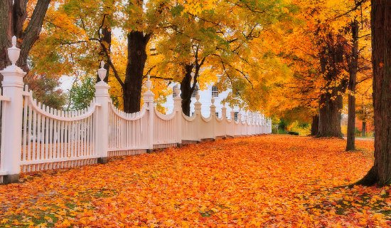 Manchester, VT: Leaf-peeping at its best!