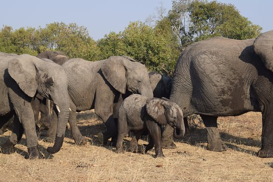 Timbavati Private Nature Reserve, แอฟริกาใต้: Elephant family