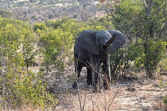 Timbavati Private Nature Reserve, แอฟริกาใต้: Baby elephant!