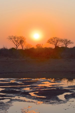 Timbavati Private Nature Reserve, แอฟริกาใต้: We stopped for sunset drinks and chatting on every evening safari - just wonderful!
