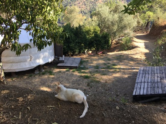 Genalguacil, Hiszpania: Uncle Rico (The Boss) and the Orange Grove Yurt, September 2017