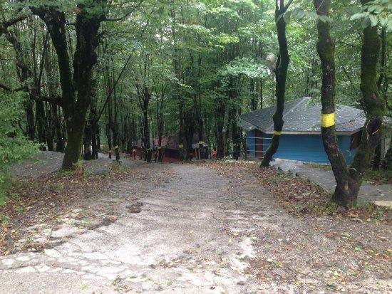Forest Resort照片