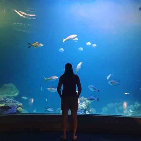 National Mississippi River Museum & Aquarium: Beautiful aquarium that captivates everyone
