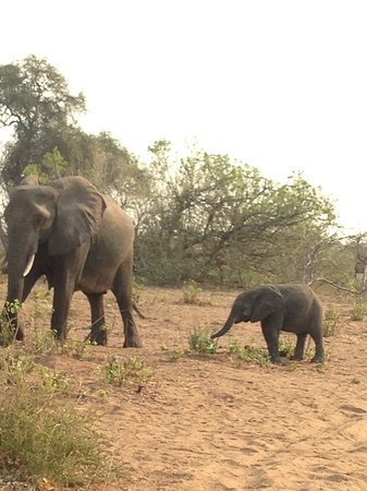 Kasane, Botswana: Female elephant with baby