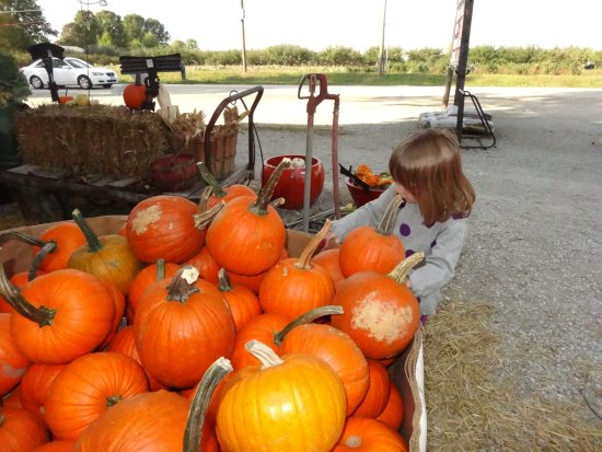 Chatham, IL: Checking out the smaller pumpkins