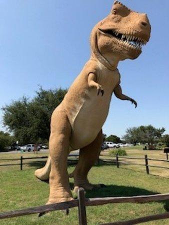 Фотография Dinosaur Valley State Park