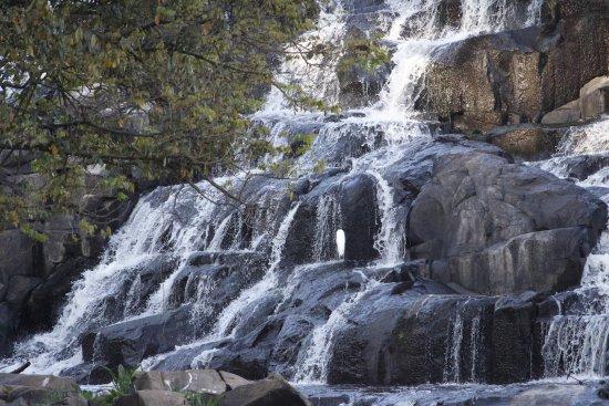 Piracicaba, SP: Pedras, águas e ave.