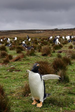 Stanley, Falklandsöarna: locals on the falklands..