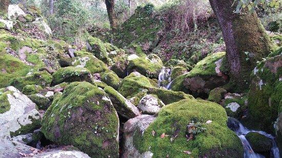 Moron de la Frontera, Ισπανία: Preciosa imagen del agua corriendo entre las piedras