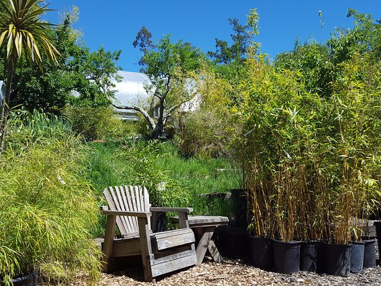 Bamboo Sourcery Nursery & Gardens