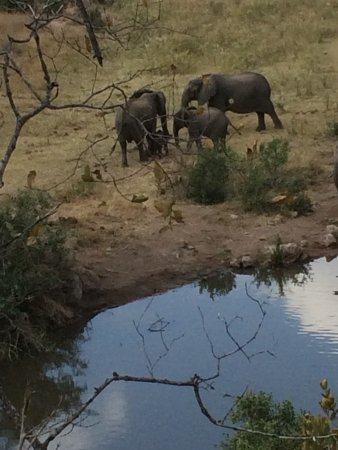Lukimbi Safari Lodge: photo8.jpg