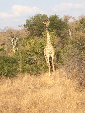Lukimbi Safari Lodge: photo9.jpg