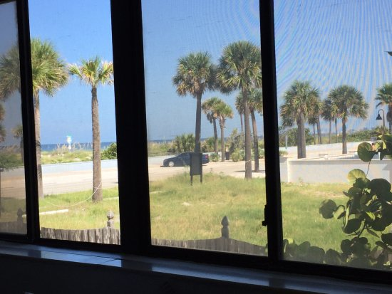 Sabal Palms Inn: View from our bedroom (thru the screen).