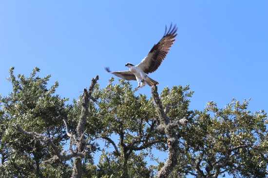 St. Marks National Wildlife Refuge: Taking Flight