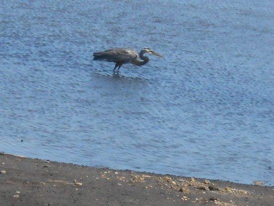 St. Marks National Wildlife Refuge: Enjoying the cool water