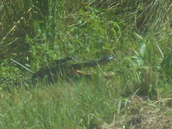 St. Marks National Wildlife Refuge: Sunning