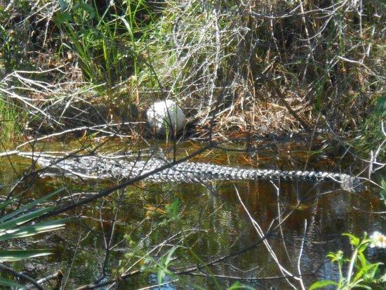 St. Marks National Wildlife Refuge: Soaking up the water