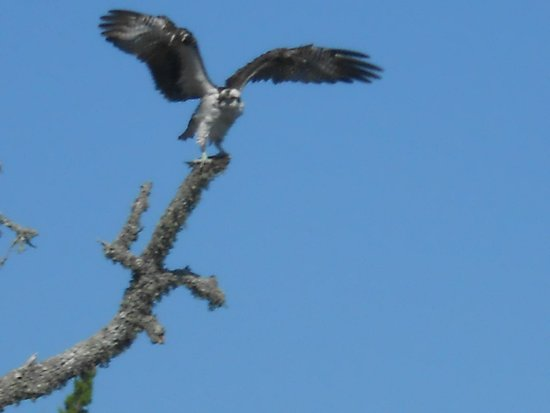 St. Marks National Wildlife Refuge: Getting ready to take off