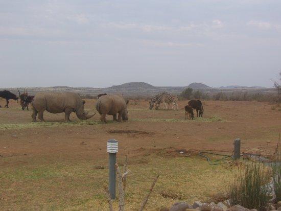 Victoria West, Sydafrika: photo0.jpg