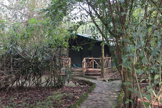 Kisoro, Uganda: Tent at Wagtail Eco Lodge