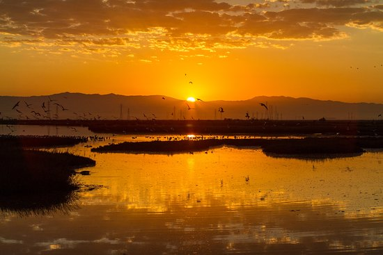 Menlo Park, Californie : Sunrise on the Slough