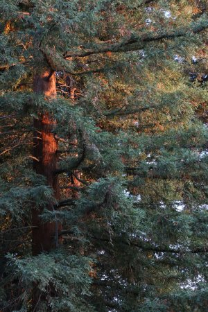 Lodi, Californien: Sunset on a tree